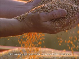 Goodyear Rice Husk Silica Renewable materials technology