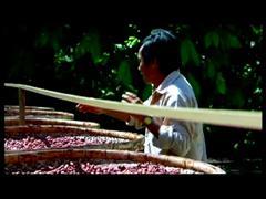 USDA, Mars and IBM to Unearth Cocoa Genetics