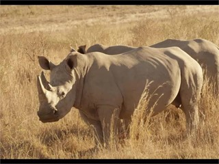 B-Roll:IBM and Welgevonden Game Reserve Protect Endangered African Rhinos with IoT