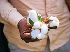 IKEA ranked number 1 for the second year in sustainable cotton report