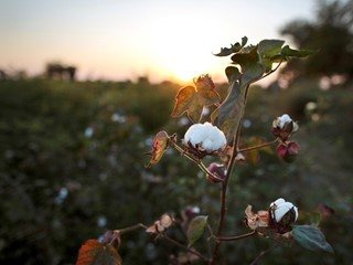 Our view on cotton from Turkmenistan