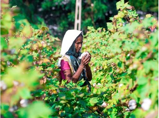 Dudapur Farm, India