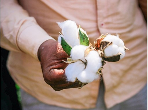 Sustainable Cotton Report