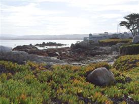 Hopkins Marine Station, California (February 6 2014)