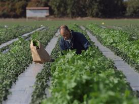 Alternative crops, Salinas Valley, February 6th, 2014