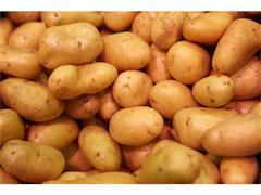 Die Geschichte der Kartoffel - von Peru bis Potsdam
