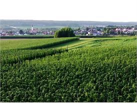 Typisches bayerisches Hopfenanbaugebiet, Landschaftsbilder