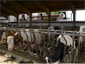 Landwirtschaftlicher Betrieb Höhensteiger in  Großkarolinenfeld, Bayern