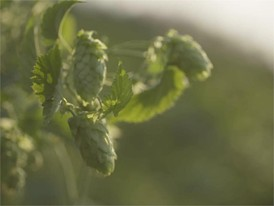 Commodities clip 01 hops