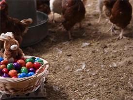 Ostereier-Film (Hühner und Strauße) - ohne Titel und ohne Bauchbinden