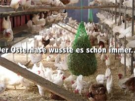 Ostereier-Film (Hühner und Strauße) -mit Titel und Bauchbinden