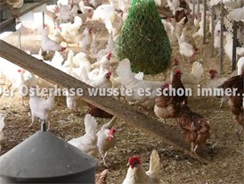 Ostereier-Film (Hühner und Strauße) - mit Titel und Bauchbinden