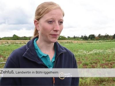 Bio-Kartoffelbauern in der Pfalz drohen 100 Prozent Ernteausfall