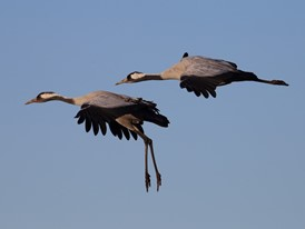 Continue to fly together: Lufthansa Group extends partnership with Crane Protection Germany