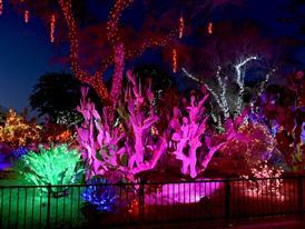 Botanical Cactus Garden