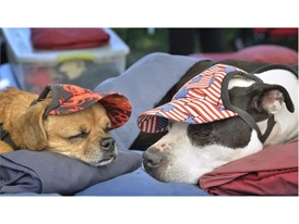 Amos and Nora nap at art in the park
