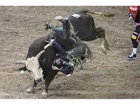 Jordan Hansen from Okotoks, Alberta, Canada, gets thrown from his bull
