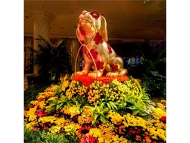 Nine-foot-high gold leafed dog displays symbolizing the 'Year of the Dog' are the centerpiece of the Wynn