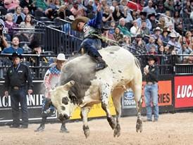 Eduardo Aparecido rides Mr. Majestic