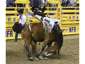 Richmond Champion competes in bareback riding