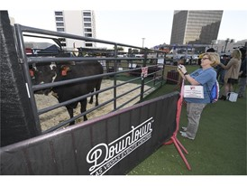 A bull from the Tuff Hedeman Bull Riding Tour