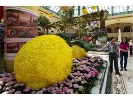Large floral lemons