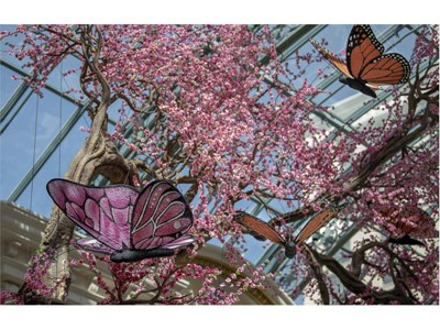 Butterflies and cherry blossoms