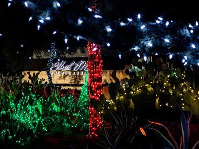 Ethel M Christmas Lights 2021 Ethel M Chocolate Cactus Garden