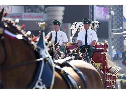 Clydesdales on the Strip - break time