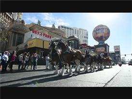 Here Comes The King! Budweiser's Famous Clydesdales Trot Down the Las Vegas Strip
