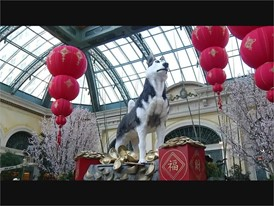 Chinese New Year at Bellagio Conservatory - RAW VIDEO