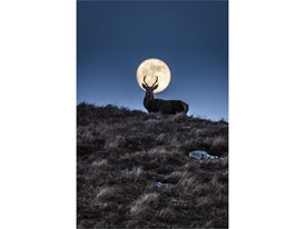 Land Animal Photography - People's Choice: Konrad Borkowski The Nocturnal Stag