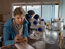 Vreni Häussermann and her team analyse marine life in a dry laboratory.