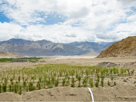 A tree plantation receiving water from ice stupas.