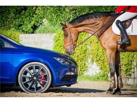 The power of one horse against 300 HP