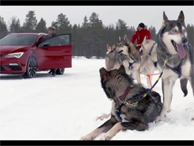 6 huskies and 300 horses