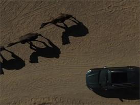 SURFING IN THE DESERT - HQ - ESP NO END