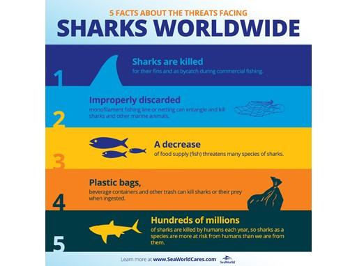 5 Threats to Sharks
