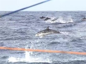 Boatfeed VEH 27 Oct IV Towill, Diamond, amazing dolphins shot