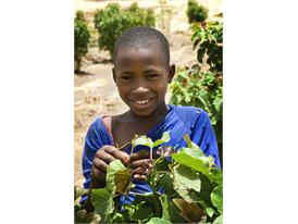 Kia pledges €1.5 Million for Charity Shrub Planting Programme in Africa
