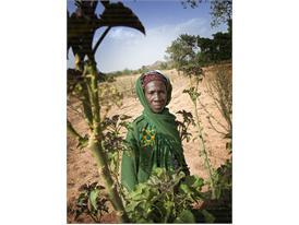 Kia pledges €1.5 Million for Charity Shrub Planting Programme in Africa