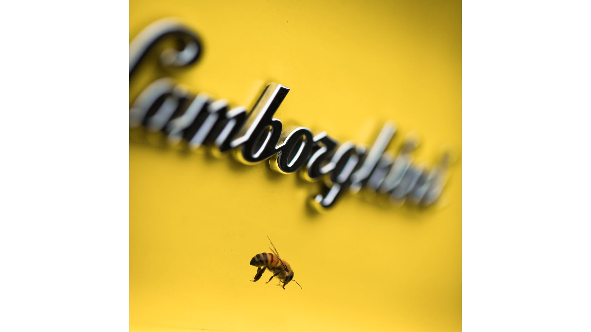 May 20, World Bee Day: Since 2016 Lamborghini has worked with bees in an environmental biomonitoring project - Image 8