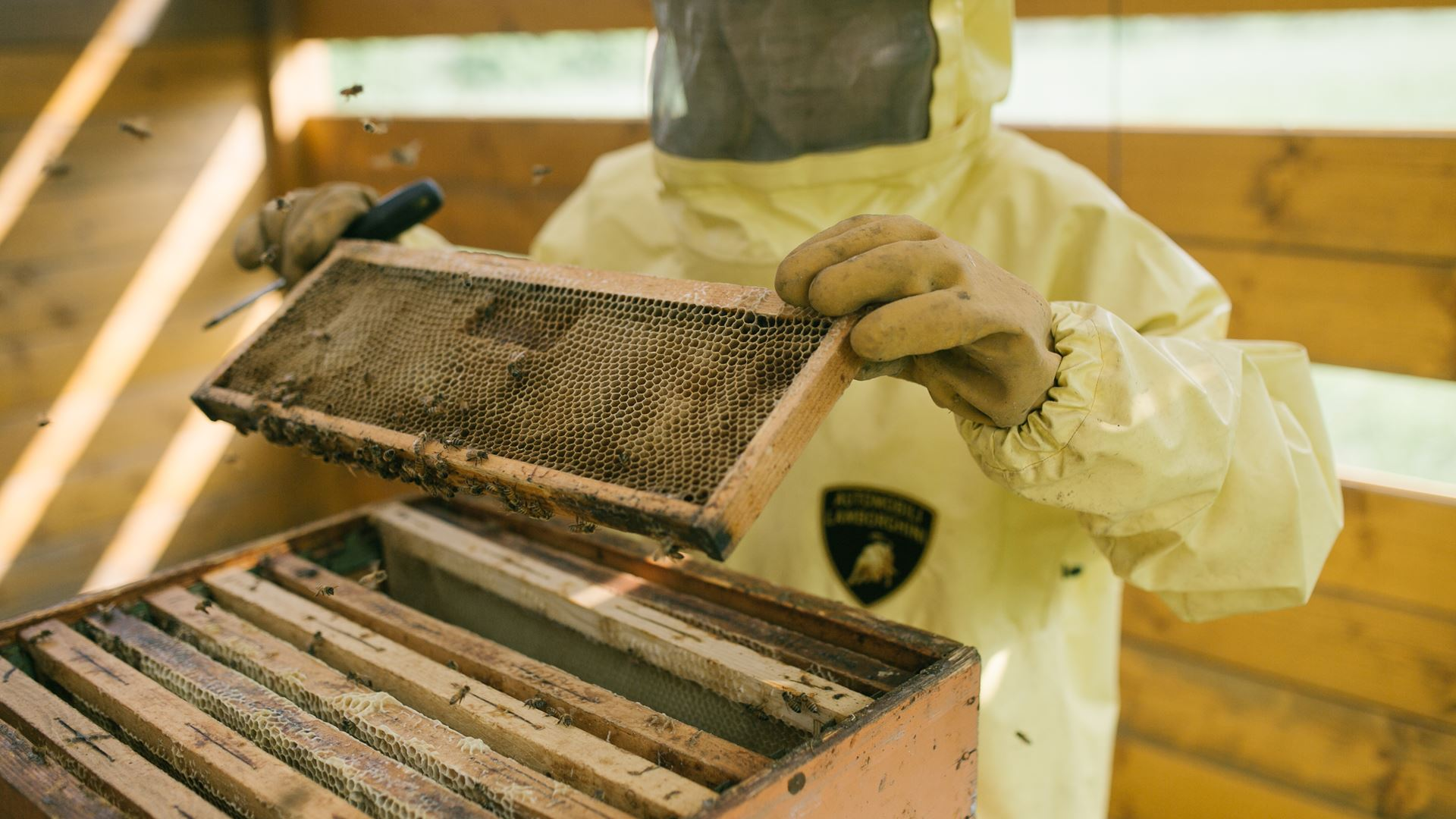 May 20, World Bee Day: Since 2016 Lamborghini has worked with bees in an environmental biomonitoring project - Image 6