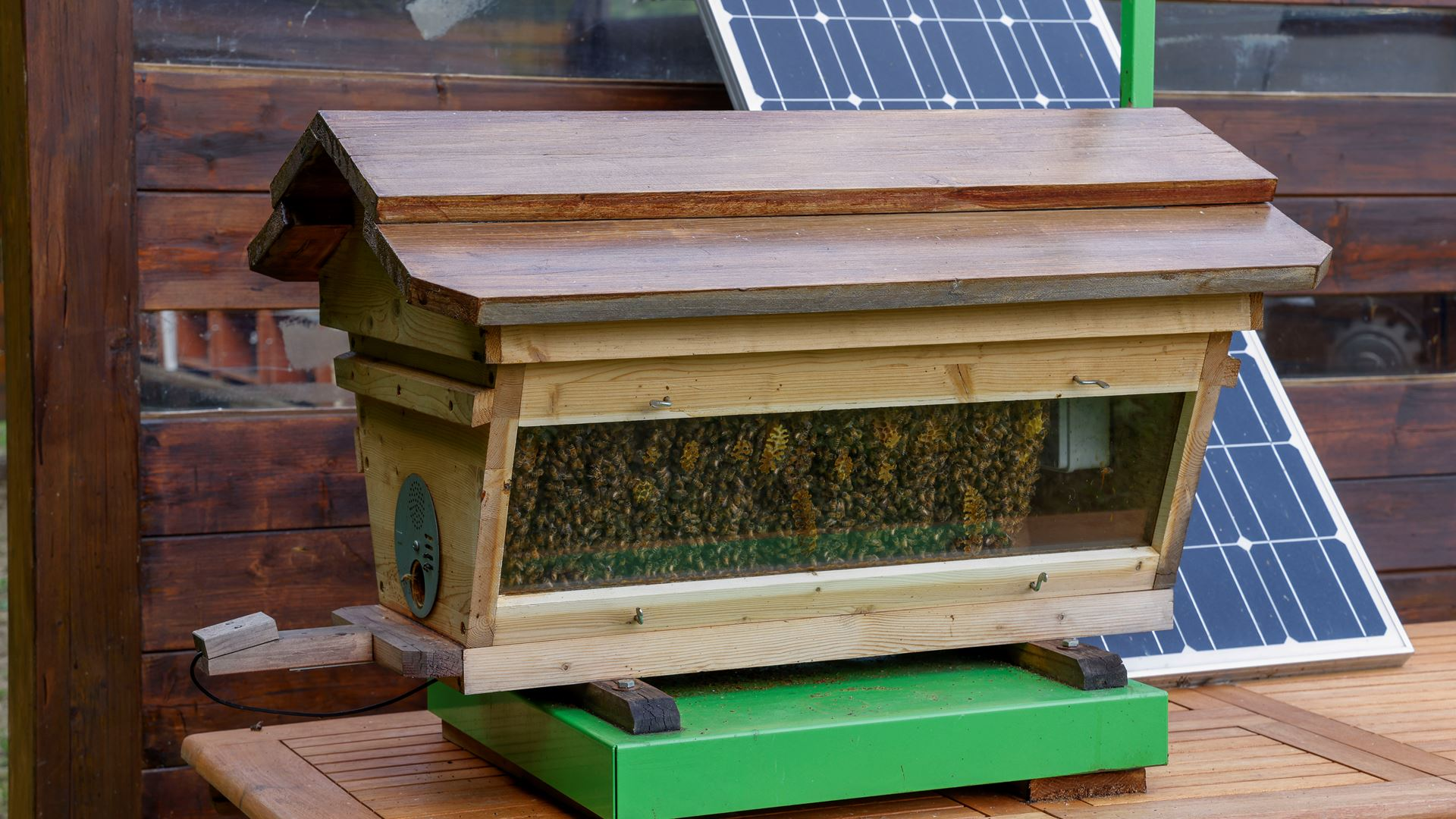 May 20, World Bee Day: Since 2016 Lamborghini has worked with bees in an environmental biomonitoring project - Image 4