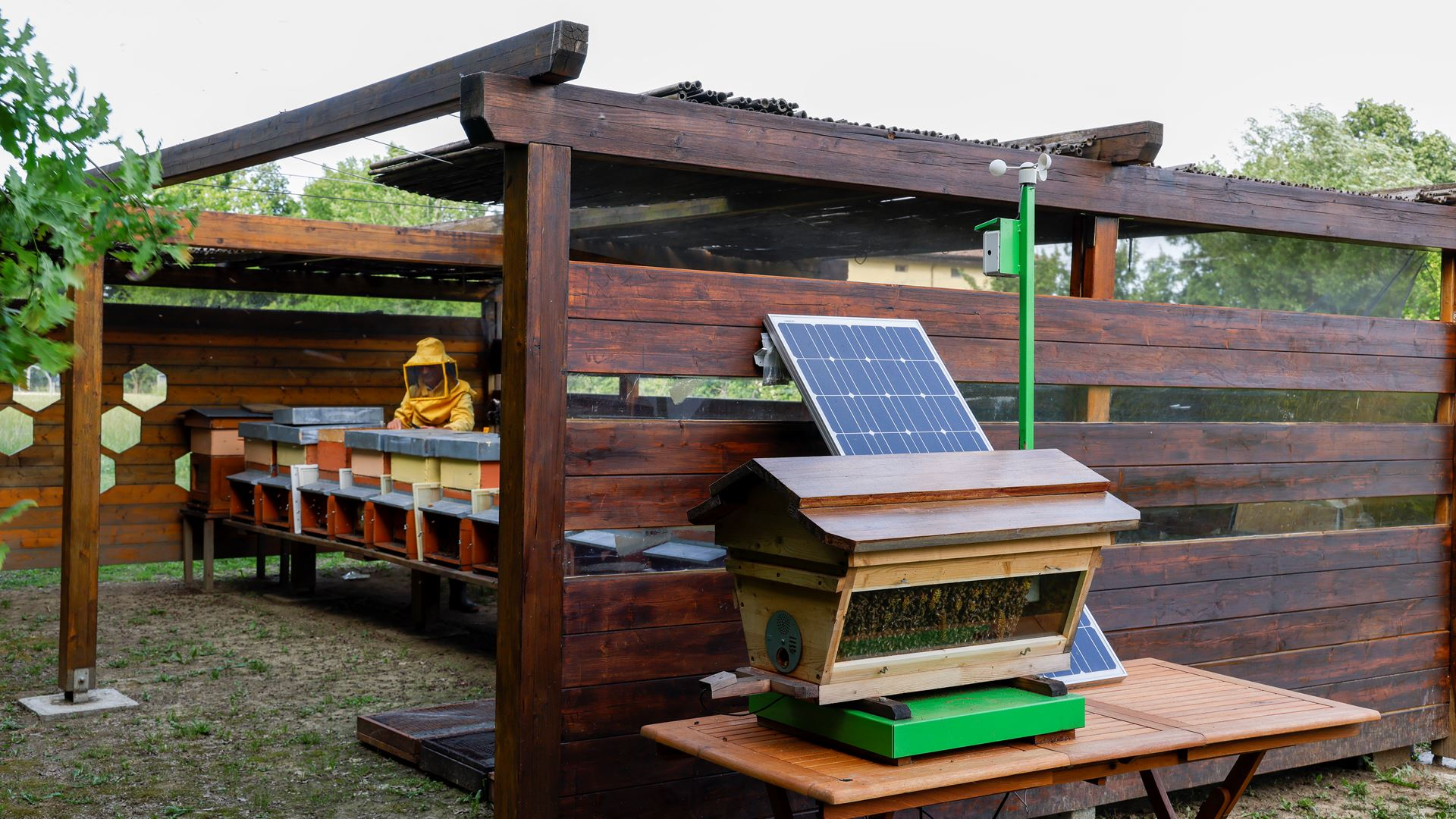 May 20, World Bee Day: Since 2016 Lamborghini has worked with bees in an environmental biomonitoring project - Image 5