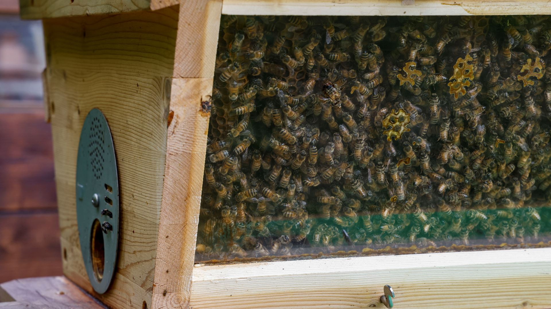 May 20, World Bee Day: Since 2016 Lamborghini has worked with bees in an environmental biomonitoring project - Image 3